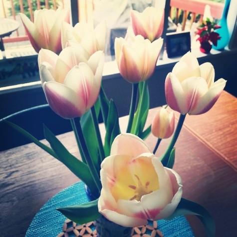 tulips.3